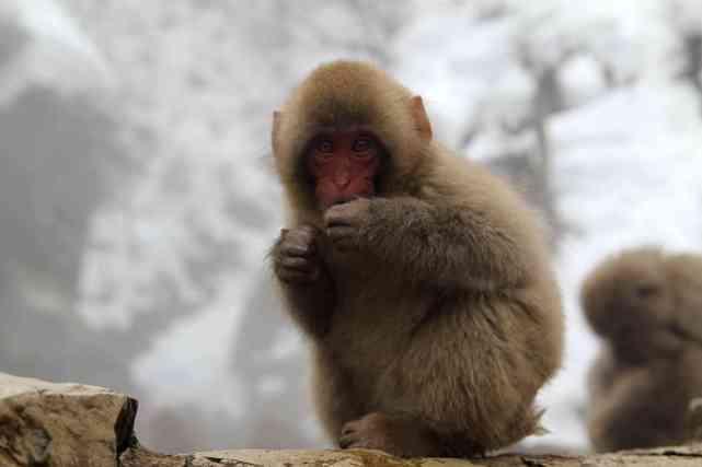 Isn't this monkey cute